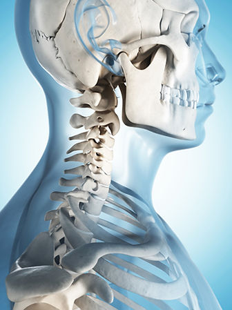 neck and spine