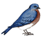 Services_StandingBluebird_Right.png