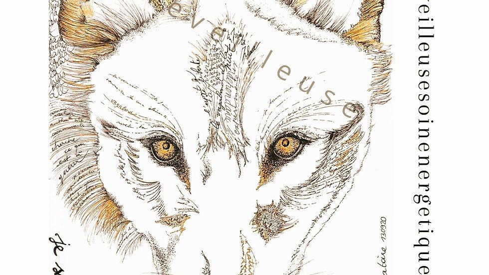 Pattes le Loup, Signature Vibratoire