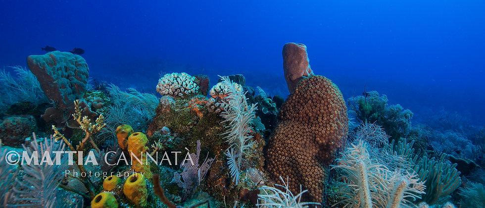 A Healthy Sea a Happy Planet