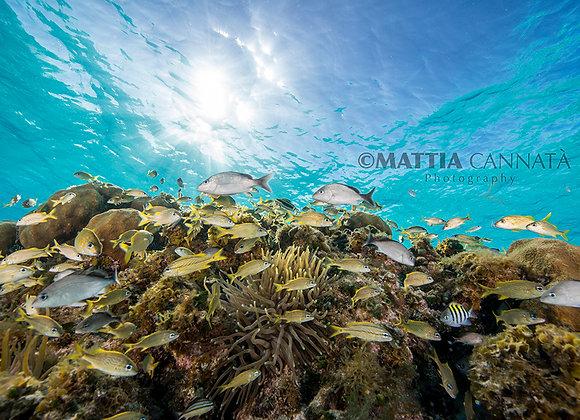 Reef SunShine