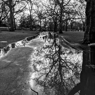 Reflection in Kennington Park_Lindsey Fl