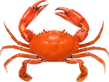 Crab_RED_01.png
