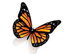 monarch plt.jpg