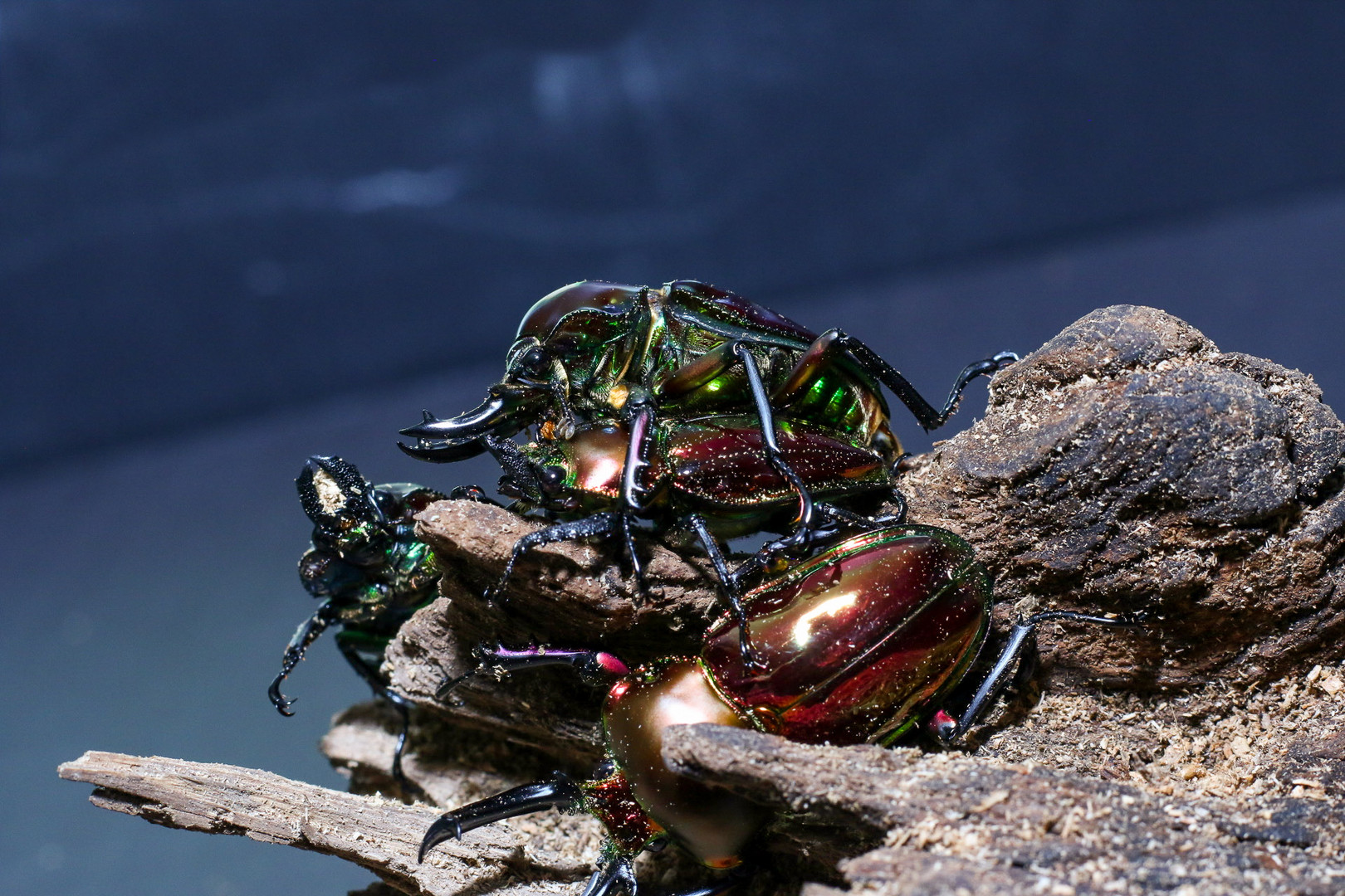 Mating and Variation