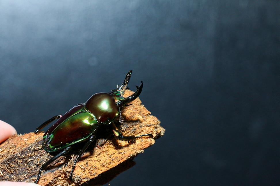 Beetles & Mites