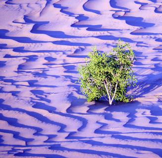desertscape 4, 2016