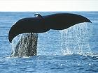 seal safari bird safari, norway, whale safari northern norway, whale safari vesterålen, killer whale, orcha, What to do in Northern Norway Bø Vesterålen Lofoten