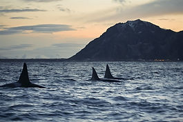 Whalesafari, Whale watching, Whale safari, Walbeobachtung, Walaufpassen