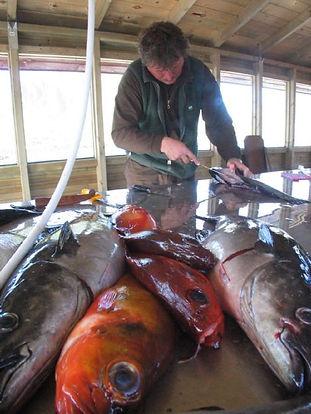 Fisking i Vesterålen, Camping og båtutleie