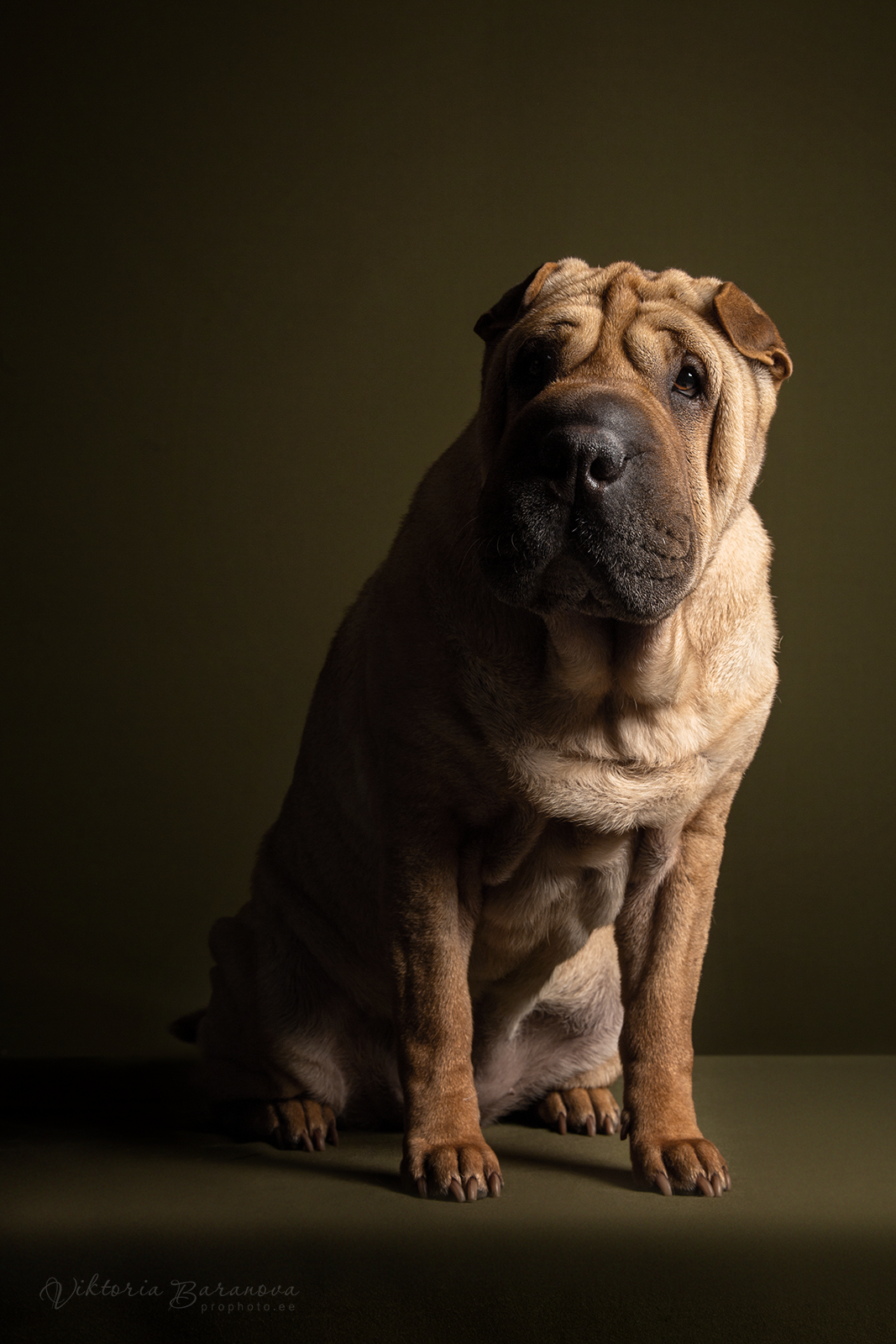 Dragonheart sharpei - Posts | Facebook | 1600x1067