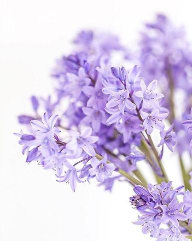 purple%20flower%20site_edited.jpg
