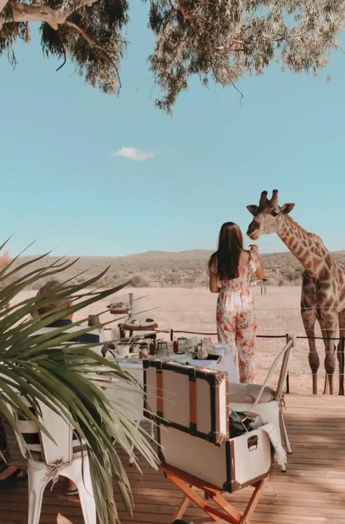 Luxury Giraffe Picnic
