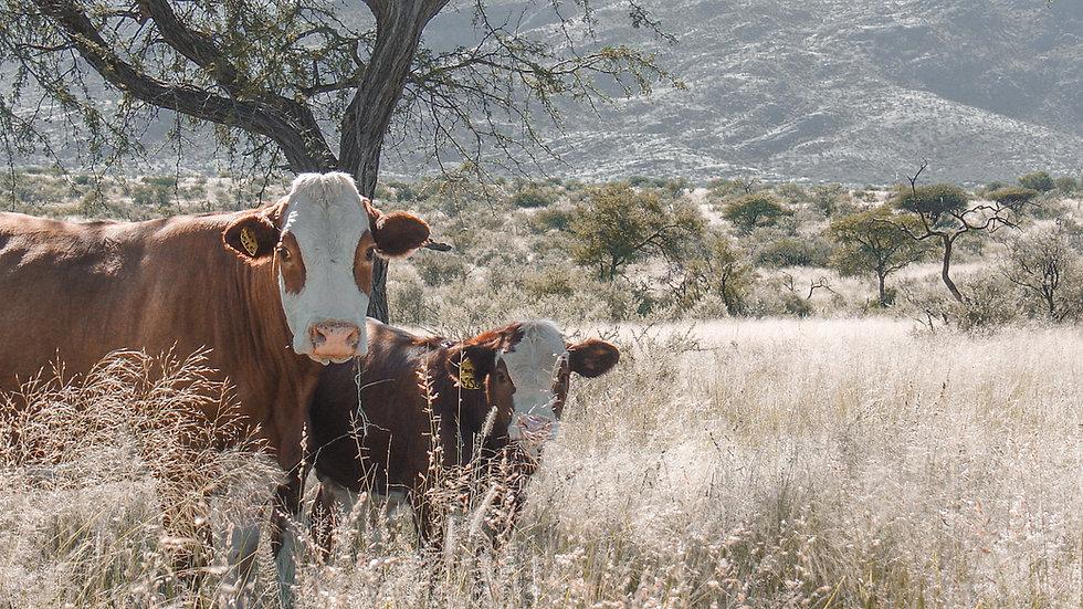 bull 003.jpg