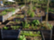bacs potagers.png