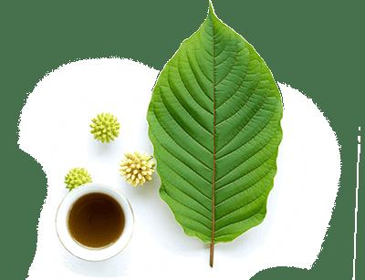 etha botanicals leaf tea.png
