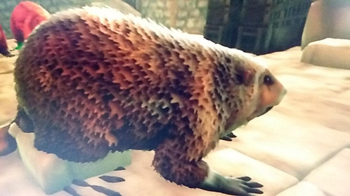 242 Unleveled Beaver