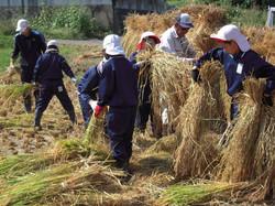 0927稲刈り(5年)