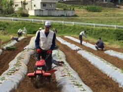 H30.5 活性化部会トマトの植え付け作業