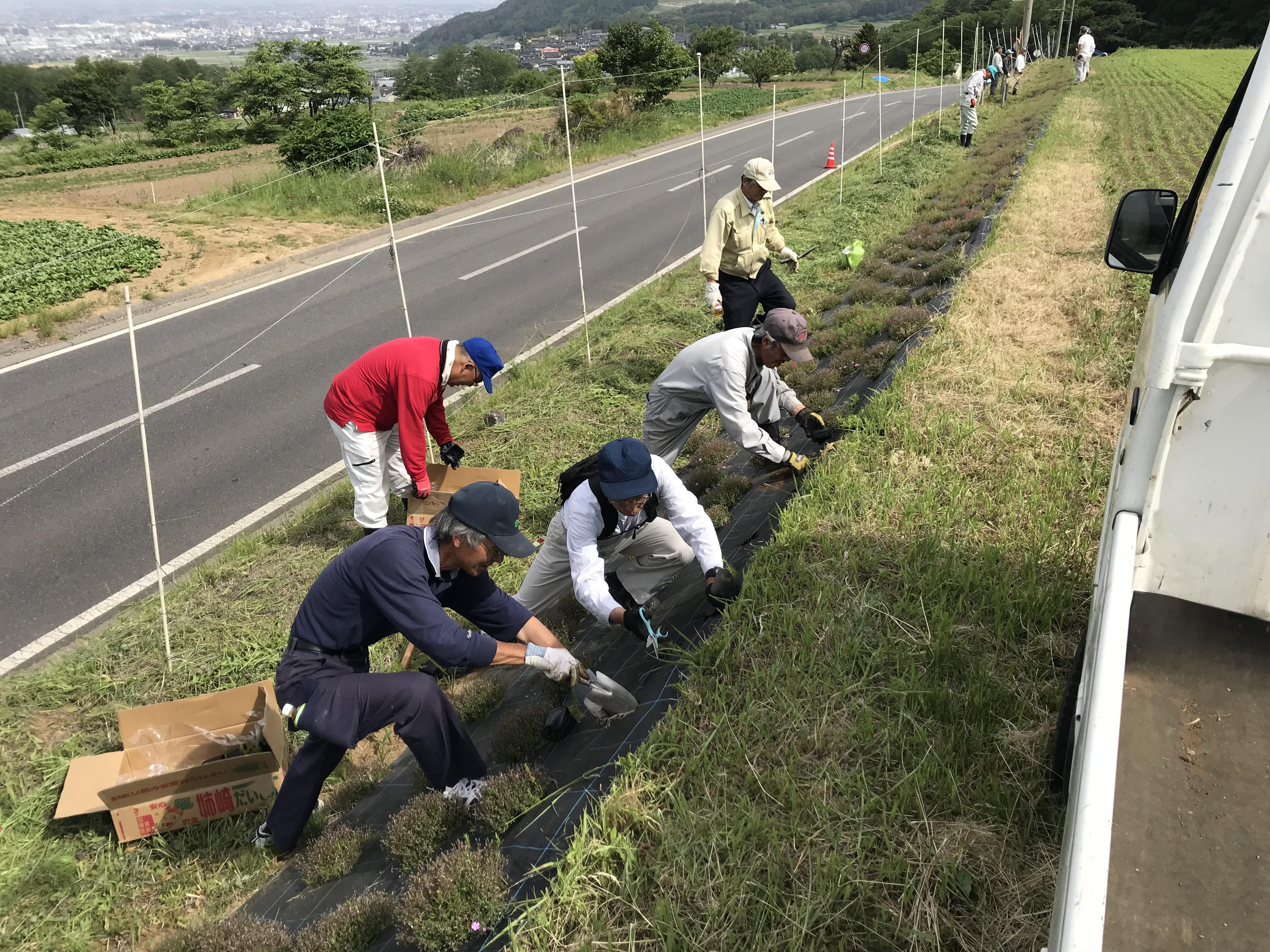 芝桜の捕植・草刈作業④