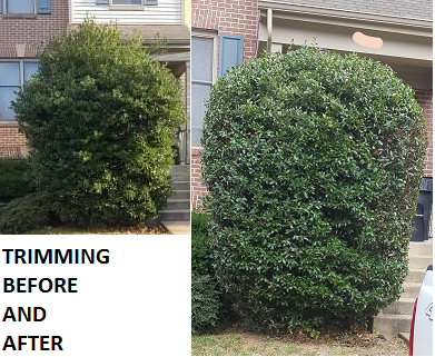Before and After Trimming
