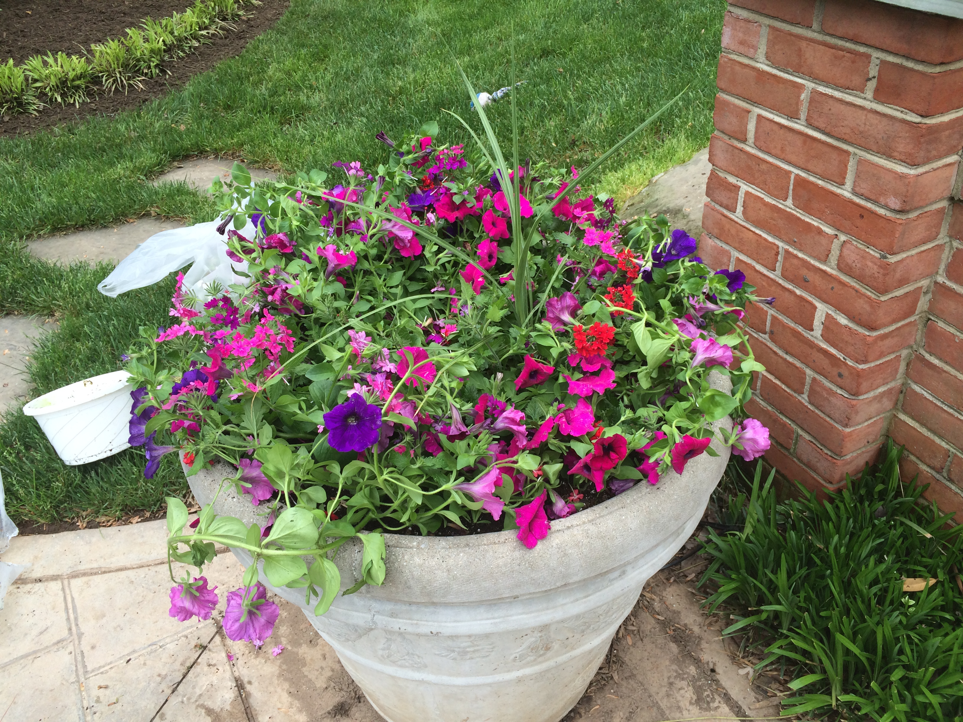Spring /Summer Annuals