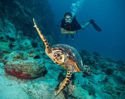 צעירים חוקרי ים