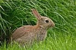 rabbit-10022463.jpg