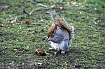 squirrel-100305.jpg