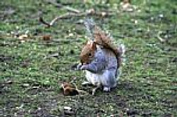 squirrel-100305.jpg