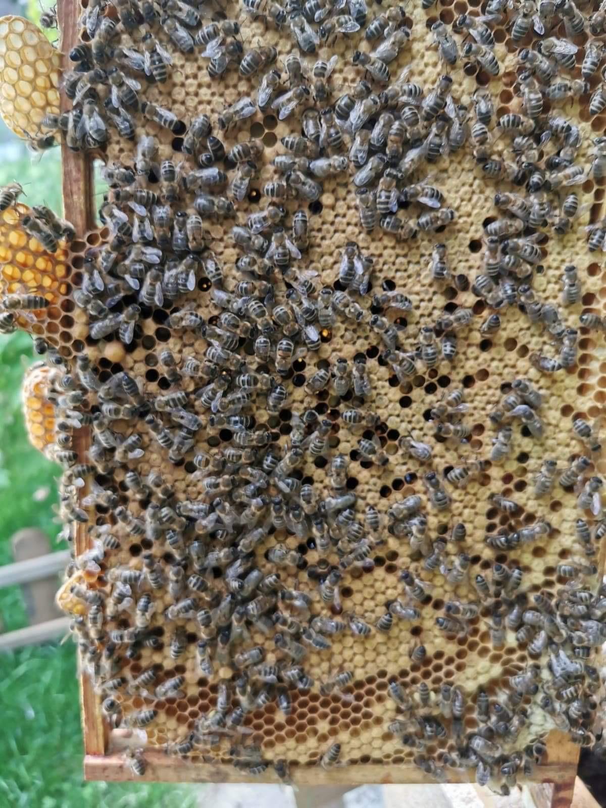 Many Many Bees