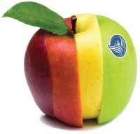Apple-web copy.jpg