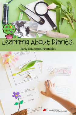 learn-about-plants-kids-printable-a-little-pinch-of-perfect