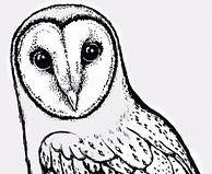 owl%2520sketch_70dpi_edited_edited.png