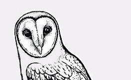 owl%20sketch_70dpi_edited.jpg