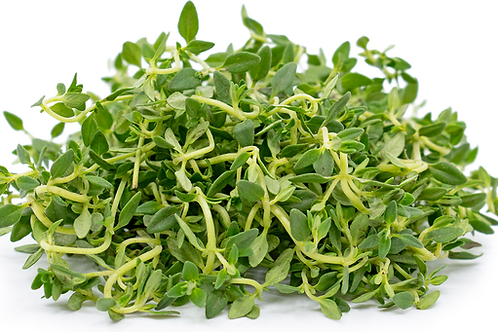 Lemon Thyme ( Packet )