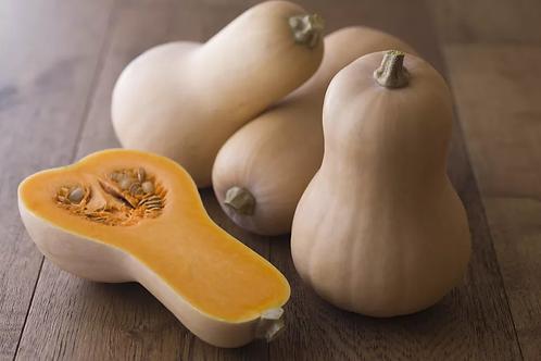 Butternut Squash ( Each )