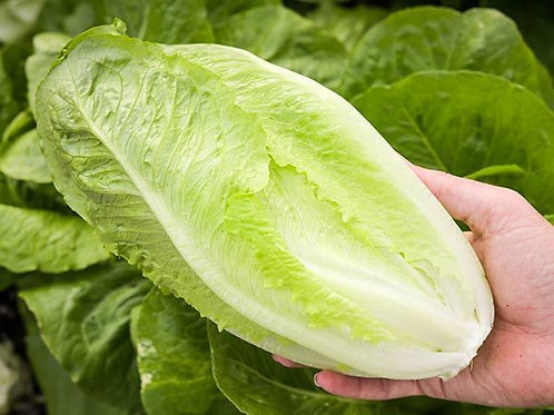 Lettuce, Cos ( Each )