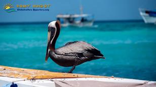 L'archipel Vénézuélien, Los Roques, un paradis aux Caraïbes