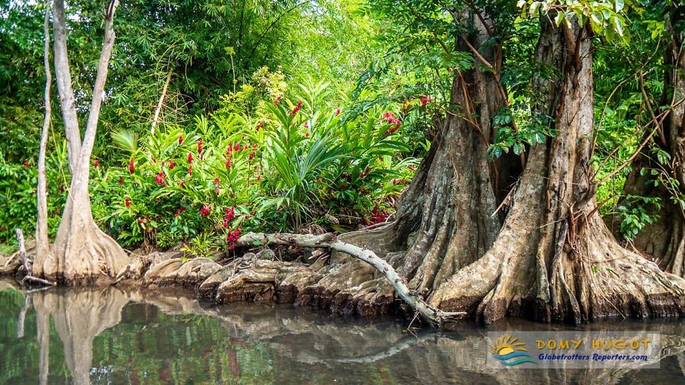 Idiana river en Dominique