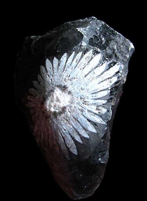 Chrysanthemum stone-2