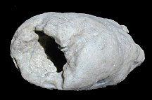 white prophecy stone