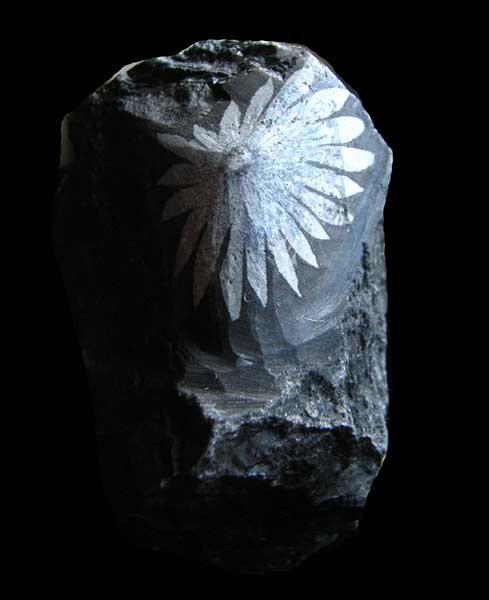 Chrysanthemum Stone-1