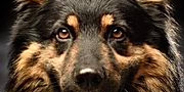 Prova-på för springglada Chodský pes! - inställt