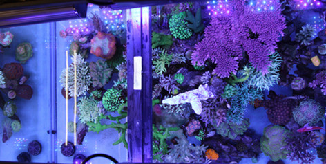 Our 300 Gallon Slice of The Ocean