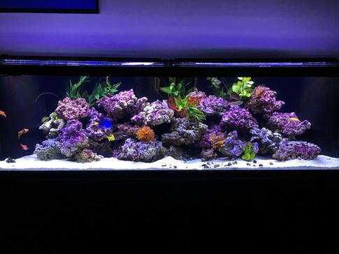 Kevin's Marine Aquarium