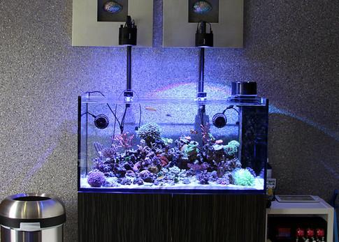 Brendan's Contemporary Reef