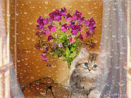 Raindrops and Kitten