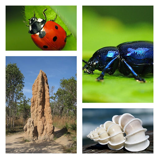 Biomimicry; examples of nature's restorative builders