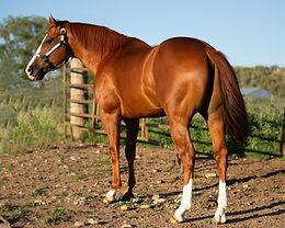 1. 2021 FCCRA Stallion Service Online Auction